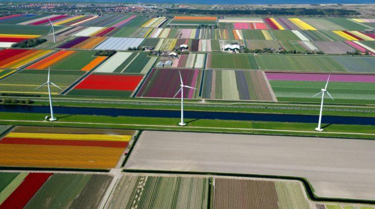 Весенняя палитра природы: самые яркие цветения в мире